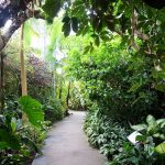 Botanical Gardens for Tourists and Residents in the Boroughs of New York City