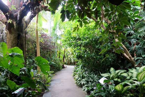 Five Best Botanical Gardens for Tourists and Residents in the Boroughs of New York City